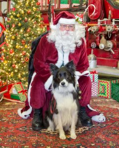 Pet photos with Santa following the Port Hope Santa Clause parade 2018 with CFFM and Alana Lee Photography