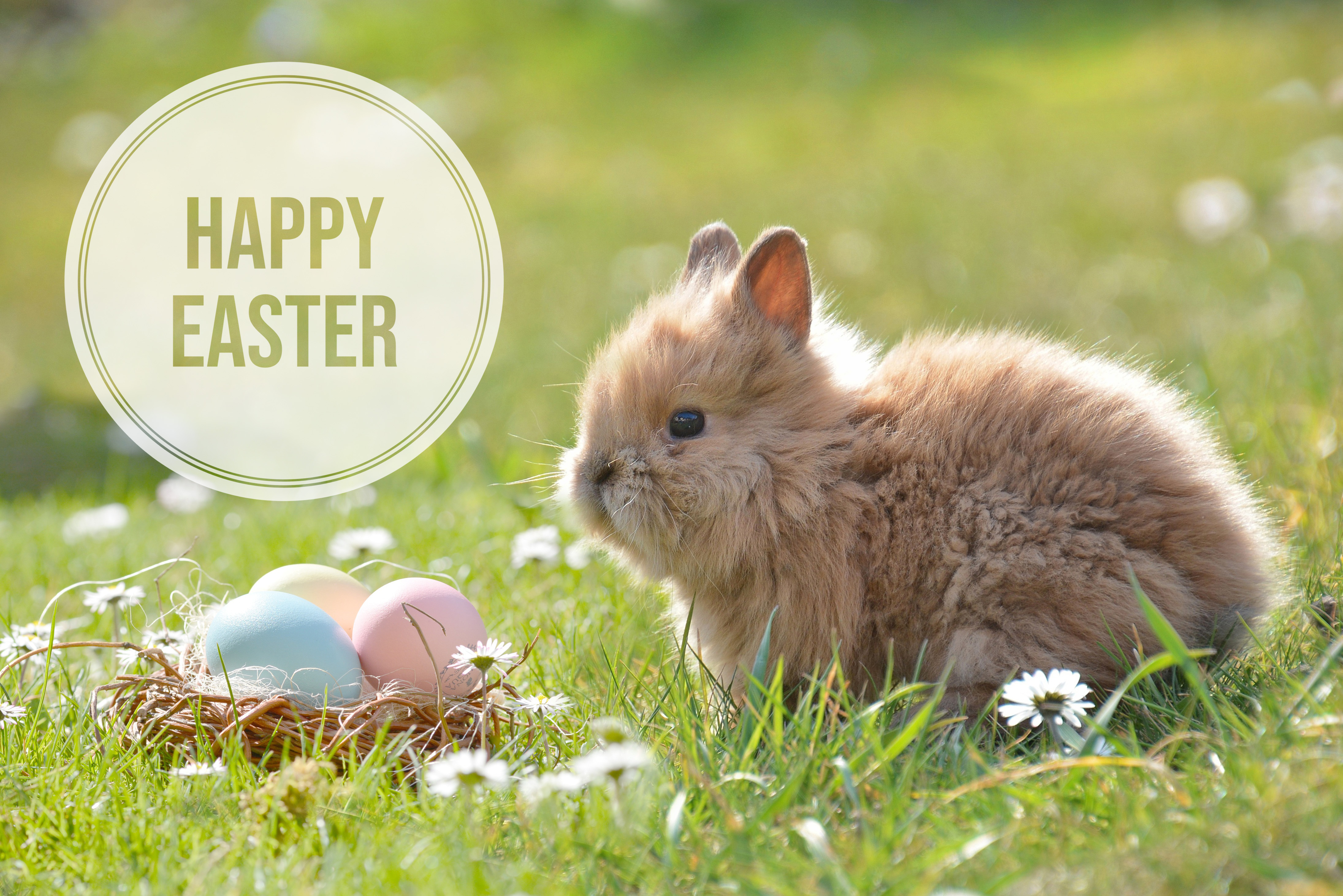 cute easter bunny after adding alana lee photography easter overlay in photoshop