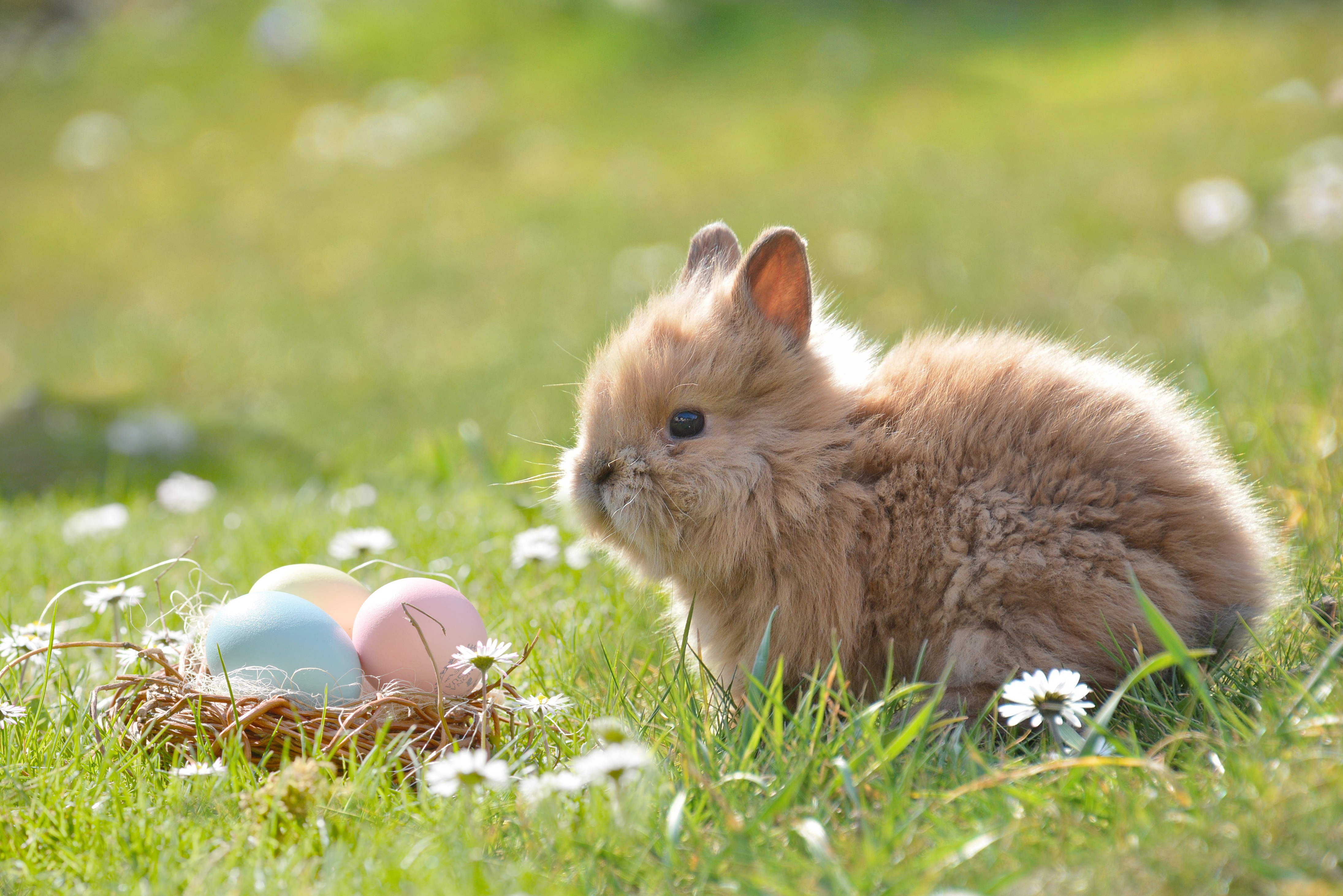 cute easter bunny before adding alana lee photography easter overlay