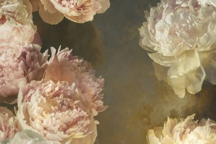 vintage painterly style botanical background image of peony flowers