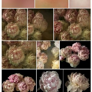 A collection of vintage style peony flower backgrounds, textures and overlays