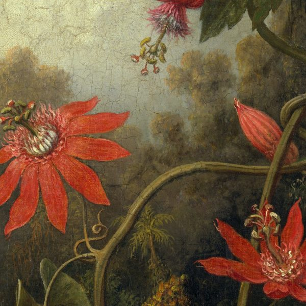 detail of an old masters painting showing red passion flowers